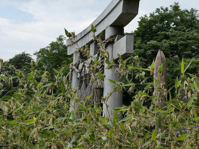 社周辺竹の花